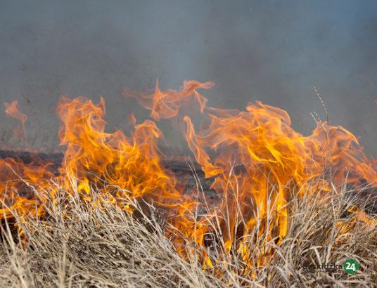 Śmierć przy wypalaniu gałęzi