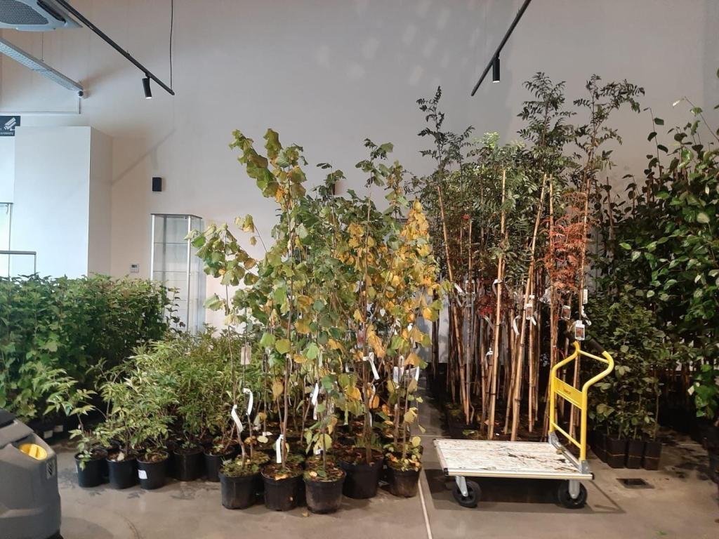bank_drzew